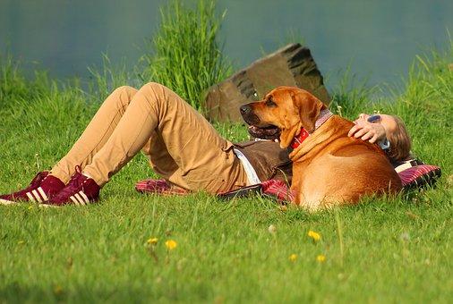 Dog, Girl, Summer, Beach, Big Dog, Friend, Best Friend