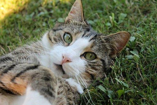 Cat, Cat's Eyes, Cat Face, Head, Cute Cat, Animal