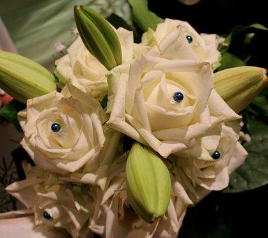 Roses, Flowers, Shooting Club, Queen