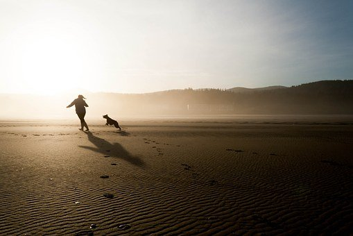 Beach, Dog, Chase, Play, Fun, Happy, Joy, Pet