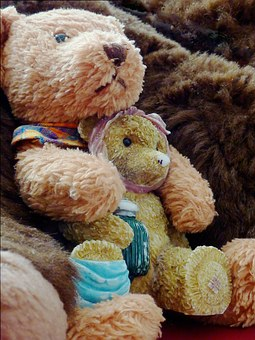 Bar, Bears, Bear, Brown, Brown Bear, Fur, Children
