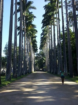 Rio, Jardim Botânico, Botanical Garden