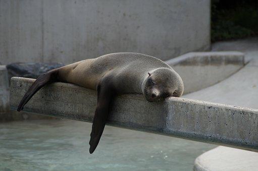 Robbe, Lazing Around, Lazy, Rest, Concerns, Animal