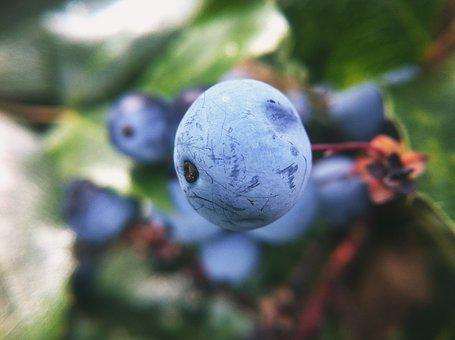 Nature, Natural, Forest, Outdoor, Environmental, Macro