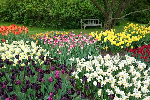 Tulips, Daffodils, Flowers, Spring, Blossom, Narcissus