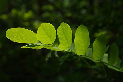 Leaves, Green, Tree, Shine Through, Shades Of Green