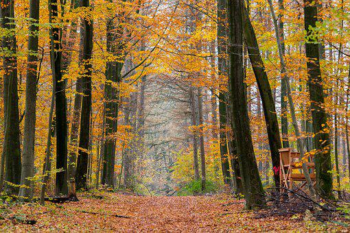 Golden Autumn, Golden October, Indian Summer, Autumn