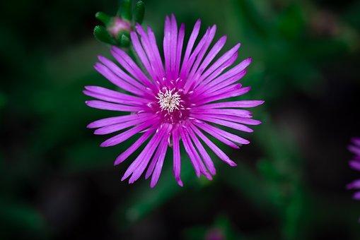 Flower, Blossom, Bloom, Nature, Summer, Bloom, Garden
