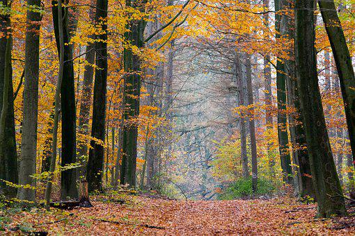 Indian Summer, Leaves, Autumn, Nature, Landscape, Mood