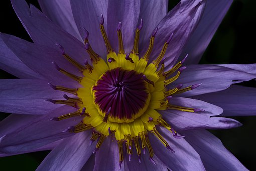 Flower, Purple, Yellow, Good Looking, Beautiful, Nature