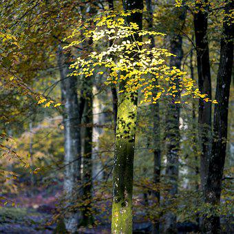 Tree, Leaves, Nature, Forest, Autumn, Green, Trees