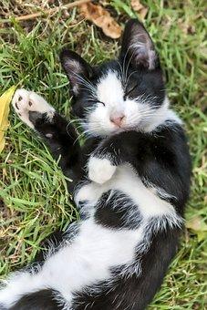 Cat, Grass, Animal, Nature, Pet, Garden, Green, Autumn