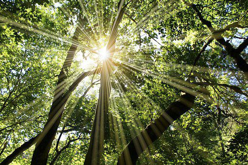 Sun, Sunbeam, Rays, Deciduous Forest, Spring, Summer