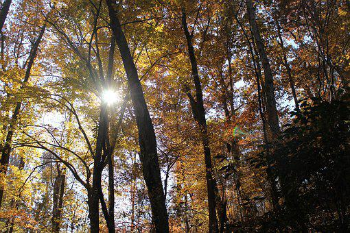 Trees, Leaves, Forest, Tree, Nature, Autumn, Landscape