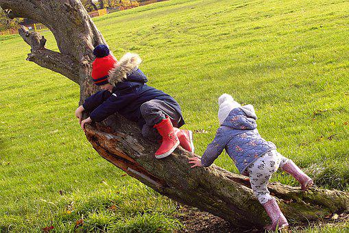 Children, Para, On The Tree, The Rise, Park, Family