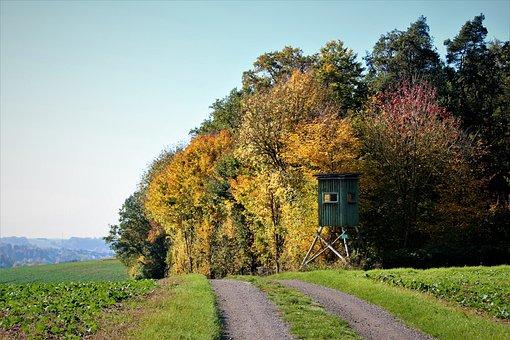 Autumn, Autumn Colours, Colorful, Leaves, Fall Foliage