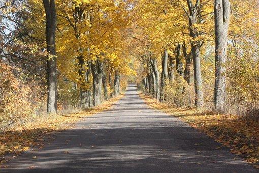 Autumn, Way, Tree, Landscape, Golden Polish Autumn