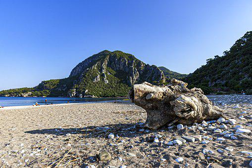Cirali, Antalya, Turkey, Beach, Sand, Tree, Stump, Hill