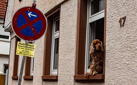 Guard, Guard Dog, Pet, Animal, Guards, Attention