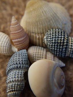 Shells, Seashells, Beach, Tiny Shells, Beach Combing