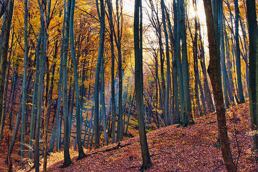 Autumn, Forest, Nature, Trees, Landscape, Leaves, Mood