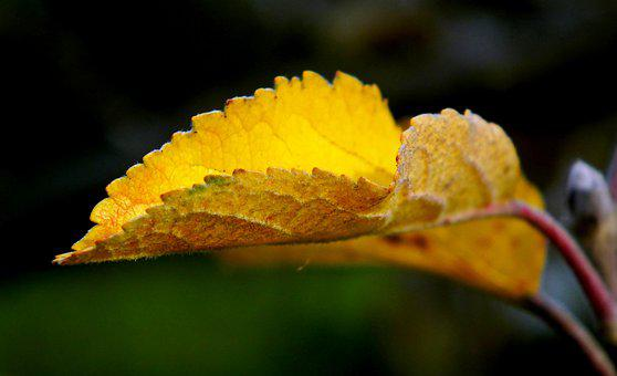 Leaf, Autumn, Yellow, Pattern, Leaves, Tree, Nature