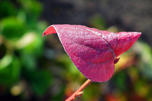 Leaf, Autumn, Pattern, Leaves, Tree, Colored, Red