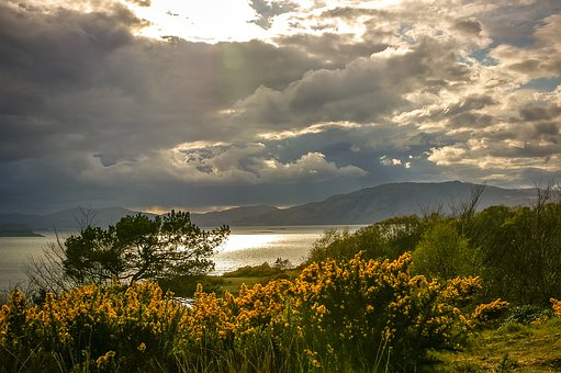 Scotland, Gorse, Blossom, Bloom, Sky, Clouds Patchy