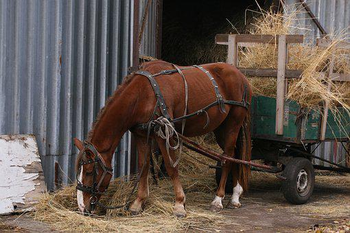 Horse, Cart, Yoked, Brown, Hay, Who, To Carry, Eating