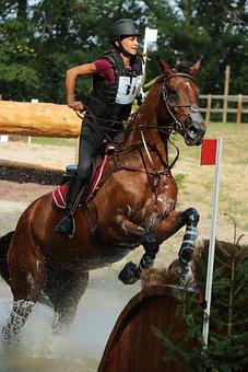 Haras Du Pin, National Stud, Haras, Great Full, Jumping