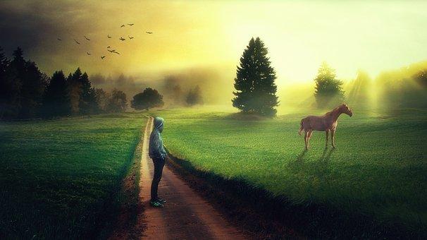 Photoshop, Manipulation, Landscape, Man, Horse, Nature