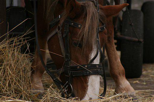 Horse, Hay, Eating, Mare, Animal, Bridle, Drawn, Who