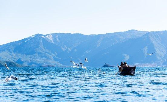 Yunnan, China, Traveling, Water, Blue, Nature, Bird