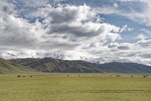 Kyrgyzstan, Graze, Horses, Pamir, High Mountains