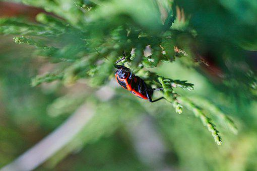 Beetle, Tree, Aesthetic, Hidden, Insect, Nature, Plant