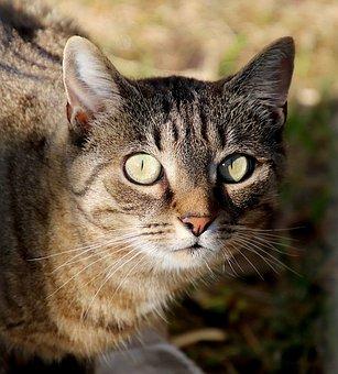Cats, Felines, Pets, Familiar, Cute, Young, Portrait
