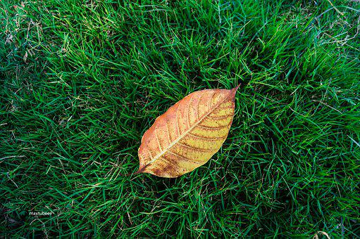 Leaf On Grass, Green, Grass, Nature, Plant, Summer