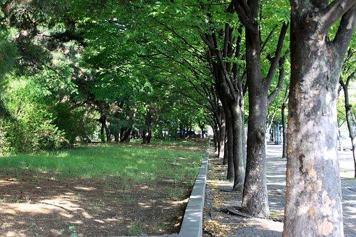 Avenue, Road, Break, Wood, Street, Landscape, The