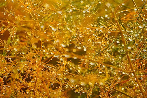 Bokeh, Background, Field, Grasses, Abstract, Autumn