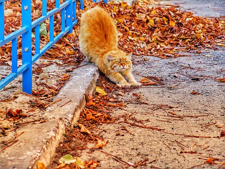 Cat, Red-headed Cat, Street, Autumn, Autumn Day, Day