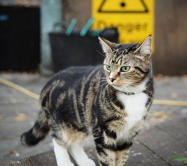 Cat, Strips, Futrzak, Home, Hunting, Manual