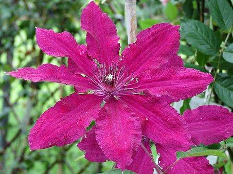 Garden, Cool, Petals, Color, Nature