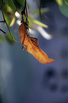 Just Autumn, Leaves, Light, Trees, Plant, Scenic