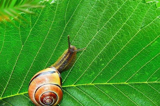 Wstężyk Huntsman, Snail, Leaf, Textures