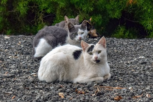 Cats, Looking, Mean, Evil, Animal, Wild, Angry, Stray