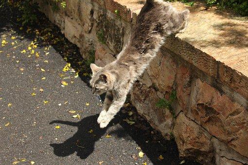 Cat, Jumping, Leaping, Fur, Cute, Pet, Mammal