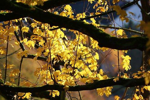 Autumn, Leaves, Yellow, Golden Autumn, Nature, Golden