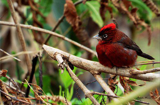 Paige, Winter, Color, Animal, Red, Forest, Birds