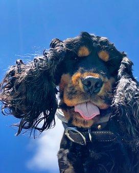 Salty Dog, Happy Dog, Elliot, Summer