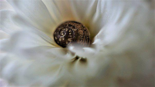 Background, Shell, Petals, White, Brown, Macro